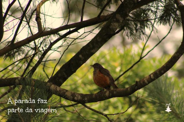 mariel fernandes.parada.passarinho.estratégia.voando mais alto.natureza.lições
